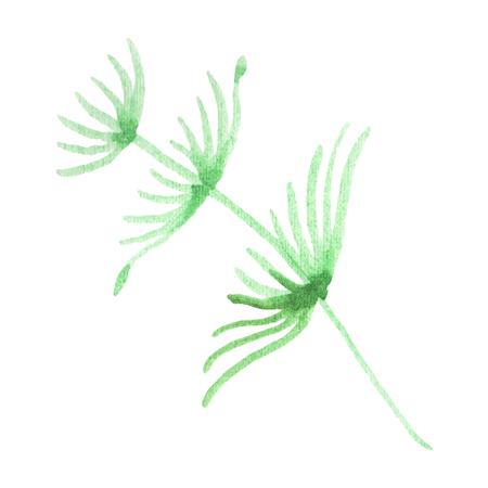 Summer beach seaweed tropical elements. Watercolor background illustration set. Watercolour drawing fashion aquarelle isolated. Isolated algae illustration element.