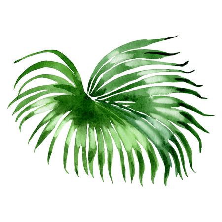 Exotic tropical hawaiian summer. Palm beach tree leaves jungle botanical. Watercolor background illustration set. Watercolour drawing fashion aquarelle isolated. Isolated leaves illustration element. Banco de Imagens
