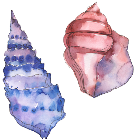 Summer beach seashell tropical elements. Watercolor background illustration set. Watercolour drawing fashion aquarelle isolated. Isolated shells illustration element.