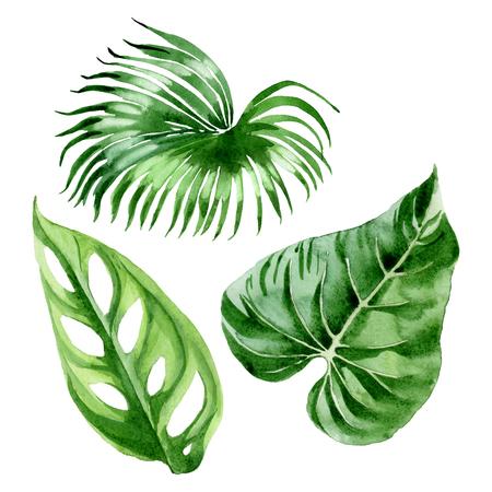Exotic tropical hawaiian summer. Palm beach tree leaves jungle botanical. Watercolor background illustration set. Watercolour drawing fashion aquarelle isolated. Isolated leaves illustration element. Stok Fotoğraf