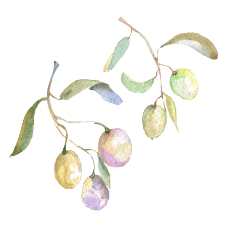 Olive branch with green fruit. Watercolor background illustration set. Watercolour drawing fashion aquarelle isolated. Isolated olives illustration element. Banco de Imagens - 123100435