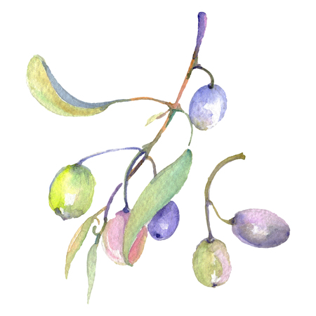 Olive branch with green fruit. Watercolor background illustration set. Watercolour drawing fashion aquarelle isolated. Isolated olives illustration element. Banco de Imagens - 123100314