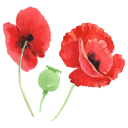 Red poppy floral botanical flowers. Wild spring leaf wildflower isolated. Watercolor background illustration set. Watercolour drawing fashion aquarelle isolated. Isolated poppy illustration element.