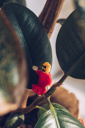 KYIV, UKRAINE - MARCH 15, 2019: selective focus of red lego figurine with beard gesturing while sitting on ficus plant
