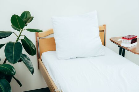 Bed with pillow, green plant and blood test tubes in hospital ward