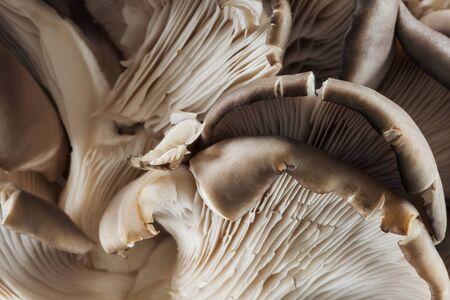 Nahaufnahme von weißen rohen strukturierten Pilzen