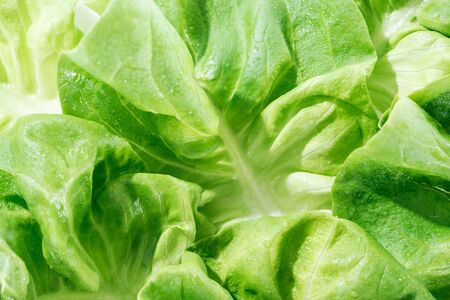 close up view of natural wet green lettuce leaves with water drops Stock Photo