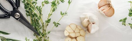 panoramic shot of garlic cloves, scissors and thyme on white paper background