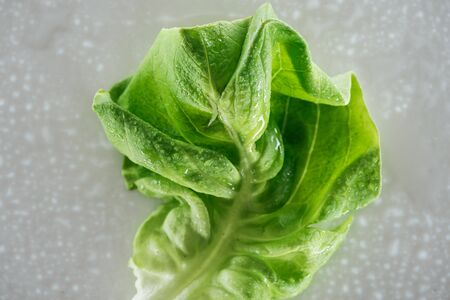 close up view of fresh wet green lettuce leaf with drops