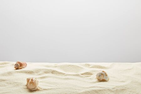 Scattered seashells on textured sand on grey background