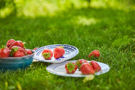 Fresh sweet strawberries in bowl and plates on green grass