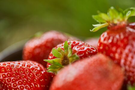 Selective focus of raw red strawberries on green grass background Stock Photo