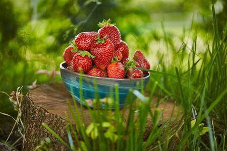 Fresh sweet strawberries in bowl on stump Stock Photo