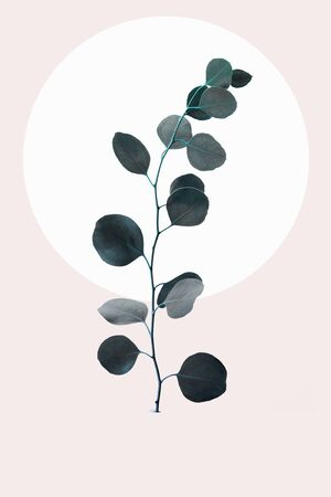 Floral geometric design with eucalyptus branch isolated on beige background