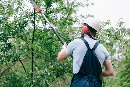 Back view of gardener in helmet and hearing protectors trimming trees with telescopic pole saw Banco de Imagens