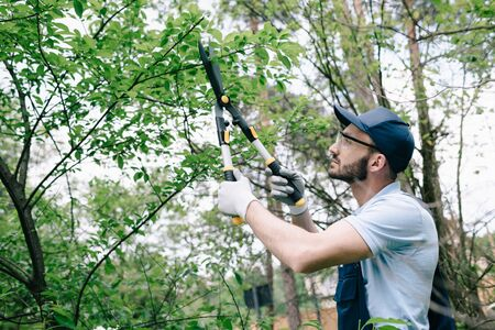 Attentive gardener in protective glasses and cap cutting bushes with trimmer in park