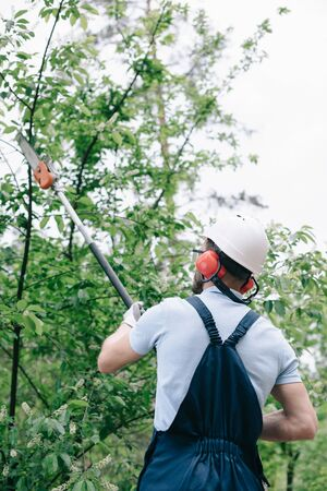 Back view of gardener in helmet trimming trees with telescopic pole saw Banco de Imagens