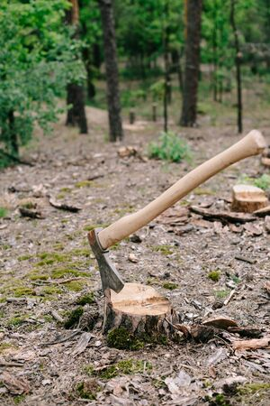 Sharp ax with long wooden handle on wood stump in forest 版權商用圖片