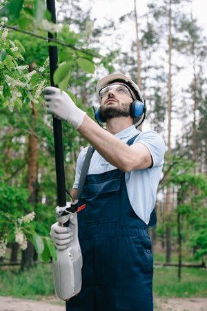 Gardener in helmet, protective glasses and hearing protectors trimming trees with telescopic pole saw in garden