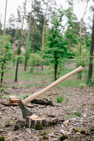 Heavy ax with long wooden handle on wood stump in forest 版權商用圖片