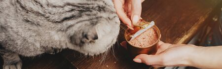 panoramic shot of young woman giving scottish fold cat pet food in can Stockfoto