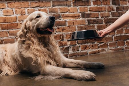 partial view of woman holding bowl with pet food near cute retriever dog