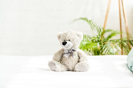 grey teddy bear near plant with green leaves at home