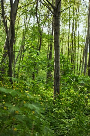 Green leaves on plants and trees in summer forest Stock Photo