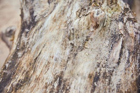 close up view of wooden textured tree trunk with sand Stock Photo