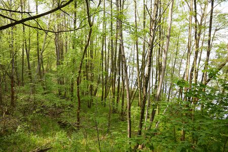 Green and leafy trees in forest thick