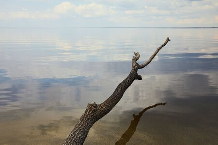 Old and dry branch over river with blue sky reflection on water