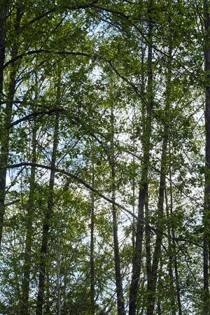 Green leaves in forest on blue sky background