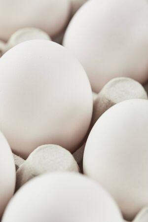 set of white chicken eggs in carton box
