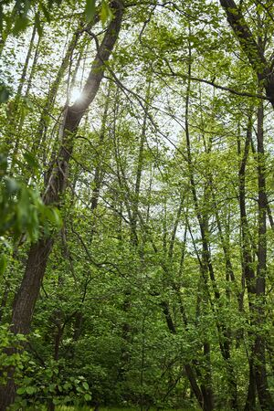 Low angle view of green forest with leaves trees Stock Photo