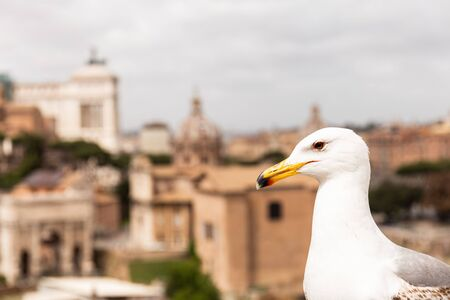 white seagull in front of buildings in rome, italy Banco de Imagens