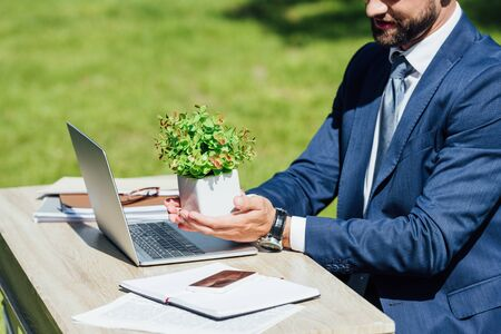 cropped view of young businessman sitting behind table with laptop and notebooks and holding flowerpot with plant