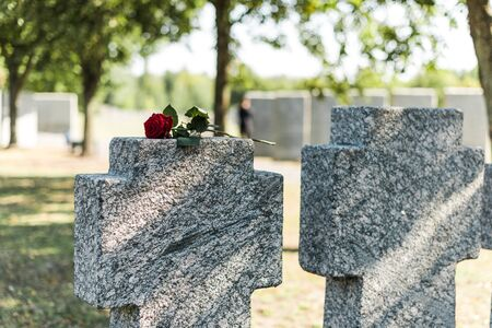 selective focus of red rose on tomb in cemetery