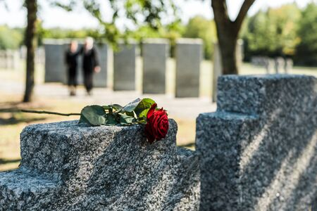 aromatic red rose on concrete tombstone in cemetery