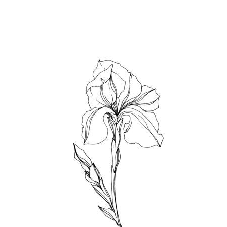 Vector Iris floral botanical flowers. Wild spring leaf wildflower isolated. Black and white engraved ink art. Isolated irises illustration element jn white background. Stok Fotoğraf - 130116862
