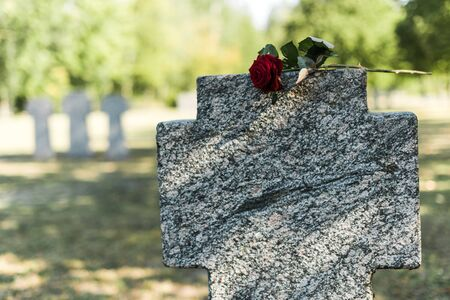 red rose on concrete tombstone in cemetery 版權商用圖片