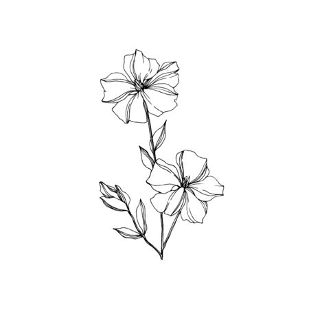 Vector Flax floral botanical flowers. Wild spring leaf wildflower isolated. Black and white engraved ink art. Isolated flax illustration element on white background. Stok Fotoğraf - 130117176