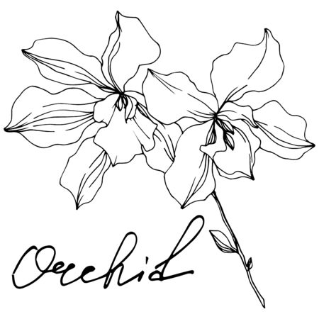 Vector Orchid floral botanical flowers. Wild spring leaf wildflower isolated. Black and white engraved ink art. Isolated orchids illustration element on white background. Banco de Imagens