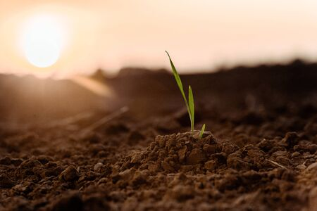 selective focus of sunlight on small green plant with leaves on ground