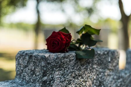 selective focus of red rose on tomb in graveyard