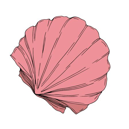 Vector Summer beach seashell tropical elements. Engraved ink art. Isolated shells illustration element on white background.