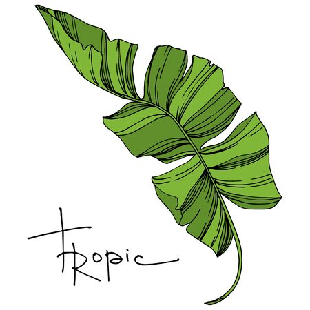 Vector Exotic tropical hawaiian summer. Palm beach tree leaves jungle botanical plant. Black and white engraved ink art. Isolated leaves illustration element.