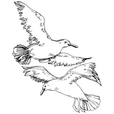 Himmelvogelmöwe in einer wild lebenden Tierwelt. Wilde Freiheit, Vogel mit fliegenden Flügeln. Schwarz-weiß gravierte Tinte Art.-Nr. Isoliertes Möwenillustrationselement auf weißem Hintergrund. Standard-Bild