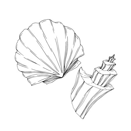 Vector Summer beach seashell tropical elements. Black and white engraved ink art. Isolated shells illustration element on white background.