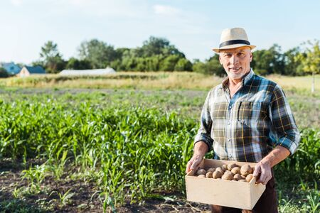 happy self-employed farmer holding wooden box with potatoes near corn field Foto de archivo