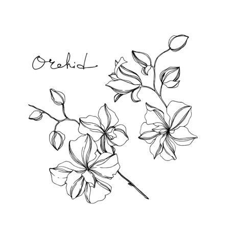 Vector Orchid floral botanical flowers. Wild spring leaf wildflower isolated. Black and white engraved ink art. Isolated orchids illustration element on white background. Stok Fotoğraf - 130116156